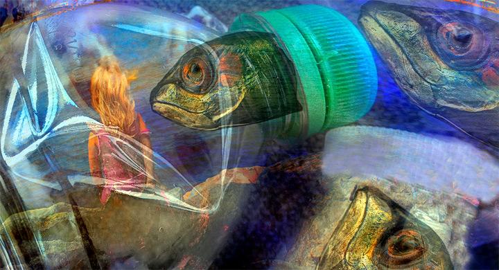 El 35 de los peces tiene pl stico en el est mago for Plastico para estanques de peces