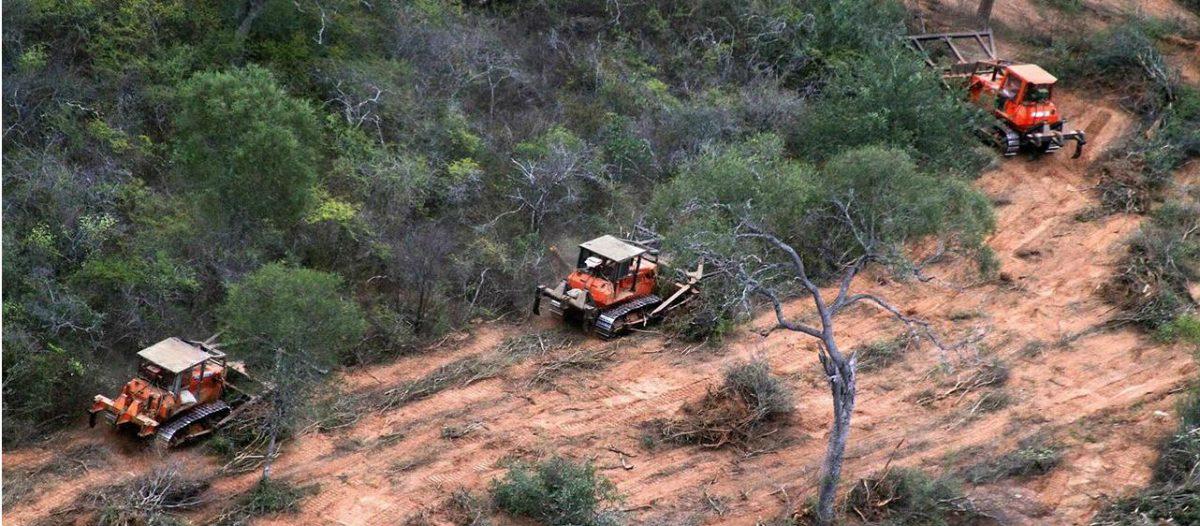 En seis meses se desmontaron en el norte 47.000 hectáreas de bosques nativos
