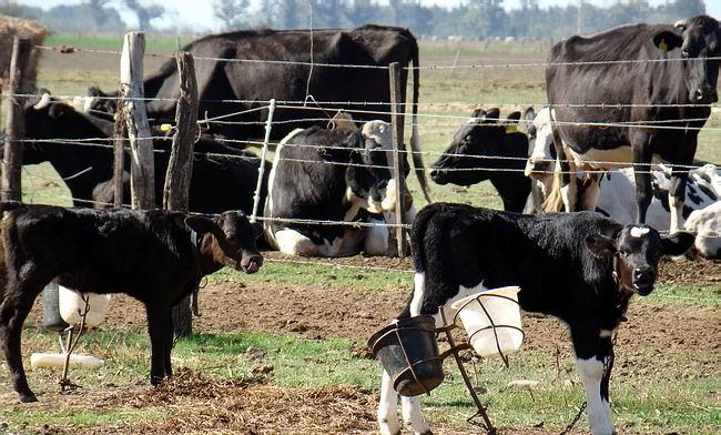 Los productores tamberos serían de los primeros en definir el futuro de la producción primaria.